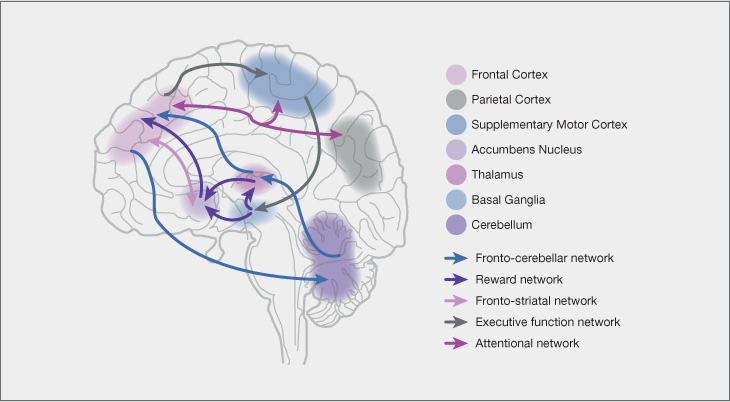 Neurobiology of adhd figure functional abnormalities in the adhd brain reproduced with kind permission13 ccuart Image collections