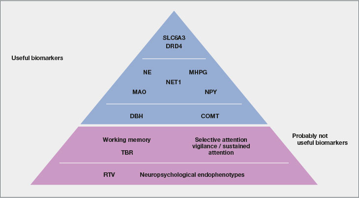A hypothetical pyramid representation of possible signature sets of biomarkers for ADHD diagnosis