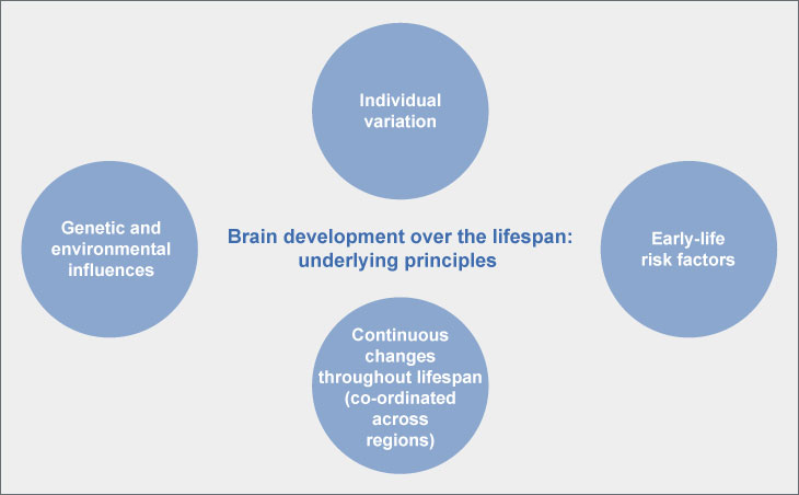 Brain development over the lifespan: underlying principles
